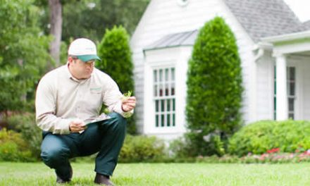 5 Reasons Why You Should Hire a Professional Lawn Maintenance Service This Summer