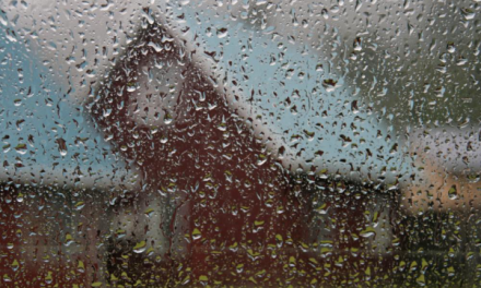 Rain on a Hot Tin Roof: Fixing Leaks in Rainy Weather
