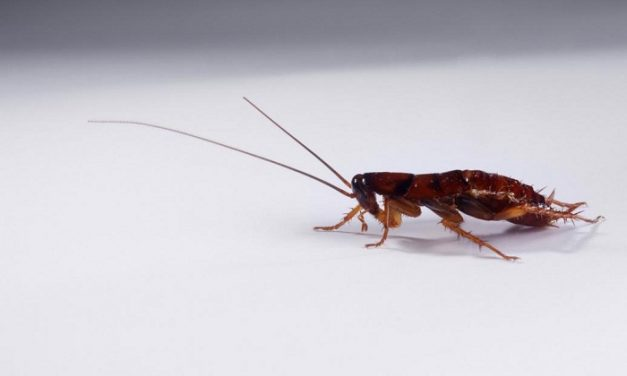 How Can You Tell If There Is A Roach 'Infestation' In Your Home?