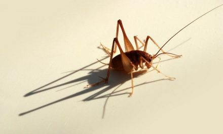How to Prepare Your House for a Bedbug Removal Treatment