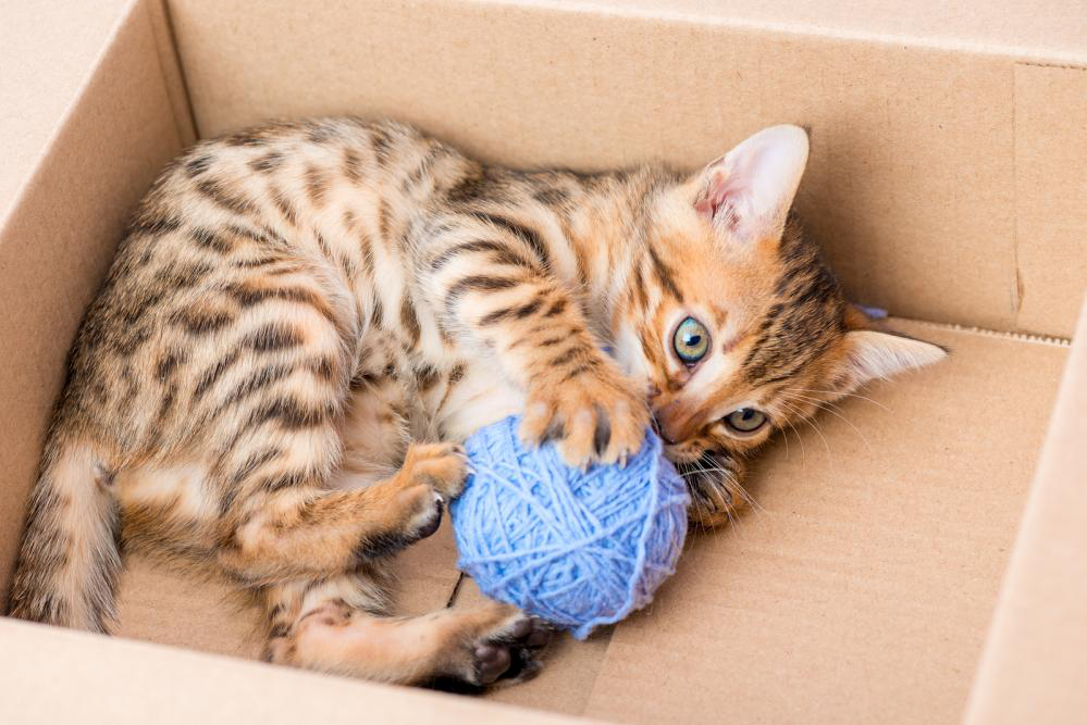 Pet Care Centers for Pets