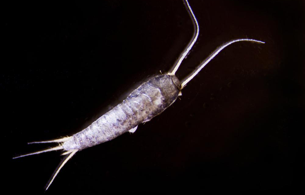 Keep Out: How To Keep Silverfish Out Of Your Basement