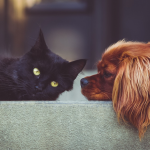 How To Keep Your Carpet Clean When You Have Pets