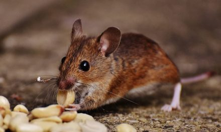 Signs of Rodents on Your Premises