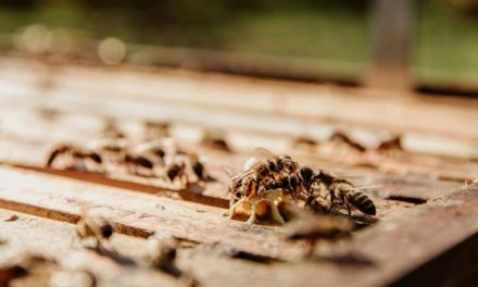 Do Termites Fly? 3 FAQs About Flying Termites