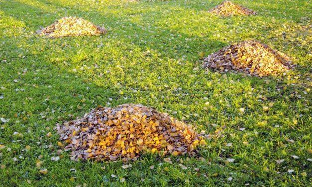 The Importance of Regular Yard Maintenance