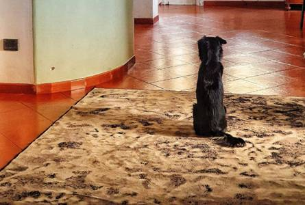A dog staring at the glossy surface of an epoxy floor
