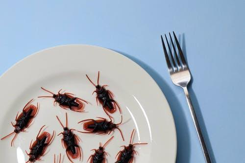 Cockroaches on a plate