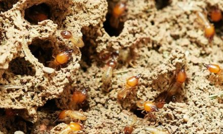 3 Reasons Why It's Important to Get a Termite Inspection Before Buying a New House