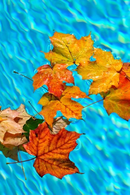 leaves in a pool