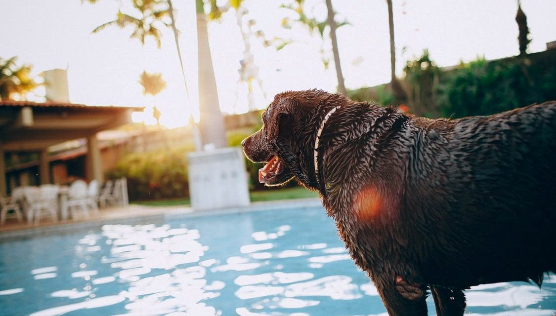 Paw-fect! 6 Ways of Making Your Pool Pet-Friendly
